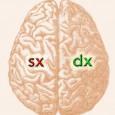 L'asimmetria del cervello ci accomuna a tutti gli animali, mantenendosi nel corso dell'evoluzione grazie ai vantaggi che presenta. I vantaggi dell'asimmetria del nostro cervello hanno due facce: una individuale e una sociale. Quali sono questi vantaggi? Vediamo insieme cosa ci raccontano le ricerche dei neuroscienziati.