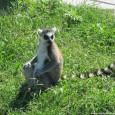 Bella esperienza quella al Parco Safari di Ravenna: un pezzo d'Africa in Romagna. Il parco faunistico, in zona Mirabilandia, ospita leoni, tigri, elefanti, giraffe, ippopotami, cammelli, babbuini, lemuri e molti altri, in un'area di 45 ettari, all'interno della quale si entra con la propria auto o a bordo di un trenino con guida o auto elettrica.