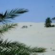 Mare limpido, spiagge di bianca sabbia, dune desertiche, palme, l'isola di Djerba, Tunisia, è ideale per una vacanza all'insegna del relax in un ambiente delicatamente esotico.