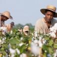 12 anni schiavo ha vinto l'Oscar 2014 quale migliore film. Non è il primo film che tratta il tema dello schiavismo, ma questo non cerca alibi nel condannarlo e gli schiavisti sono rappresentati per lo più come esseri orrendi, psicotici e violenti.