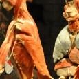 Body Worlds, oltre 38 milioni di visitatori in oltre 80 città nel mondo, è a Bologna fino al 27 aprile 2014; è una mostra scientifica dove a parlare sono i corpi, con la loro anatomia e fisiologia, autentici corpi e campioni anatomici umani, conservati con la tecnica della plastinazione.
