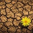 La resilienza è la capacità umana di resistere alle crisi senza esserne schiacciato, ritrovando più o meno rapidamente l'equilibrio; quello che serve in tempo di crisi e non solo. Leggi come costruire resilienza.