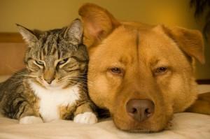 cane e gatto 1