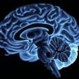 Per capire meglio come funziona il cervello possiamo dividerlo in quattro regioni, ognuna con caratteristiche specifiche, anche se interconnesse le une alle altre: il tronco encefalico le aree limbiche, la corteccia cerebrale e la corteccia prefrontale. Leggi perché ci succede di comportarci in maniera irrazionale o stupida.
