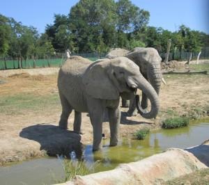 Elefanti al Safari Ravenna