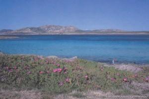 Sardegna, costa nord